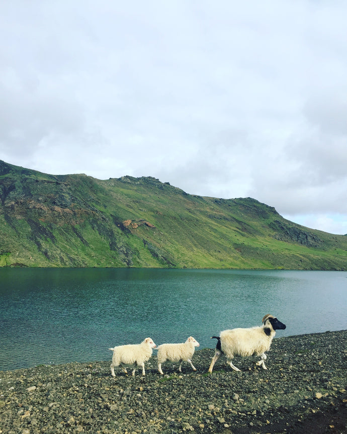 Iceland (part 2) - Backroads, playing paparazzi with sheep, otherworldly landscapes and 24/7 sunlight.
