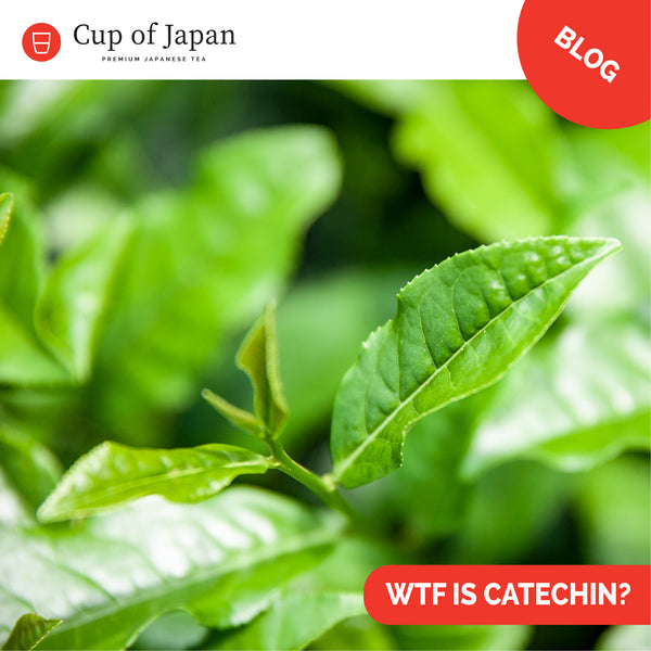 WTF is a Catechin?