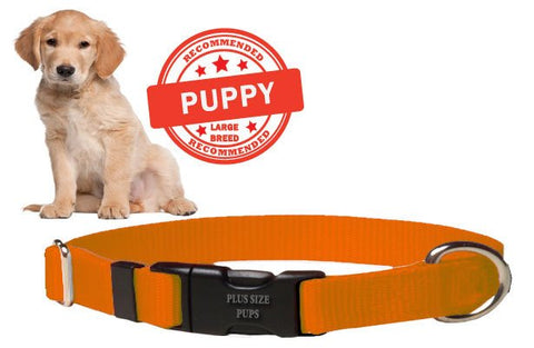 Puppy Dog Collar - Orange