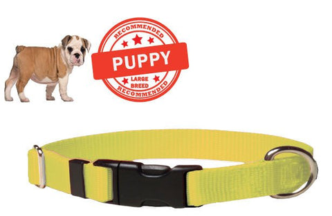 Puppy Dog Collar - Yellow