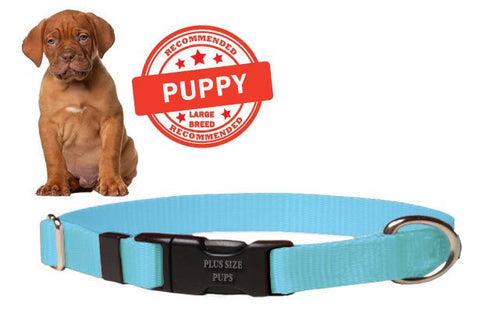 Puppy Dog Collar - Baby Blue