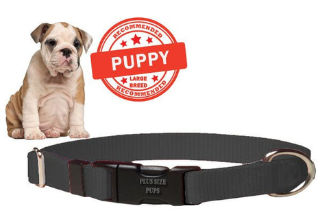 Puppy Dog Collar - Black