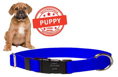 Puppy Dog Collar - Blue