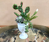 Decorative Planter with Cactus, Green Grass Succulents, Christmas Cactus in Milk Glass Planter - Nature Land Candles