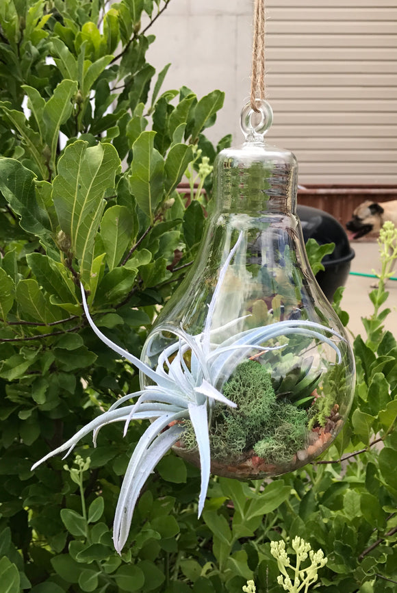 Hanging Light Blub Glass Vase with Artificial Grass Succulent and a Monarch Butterfly - Nature Land Candles