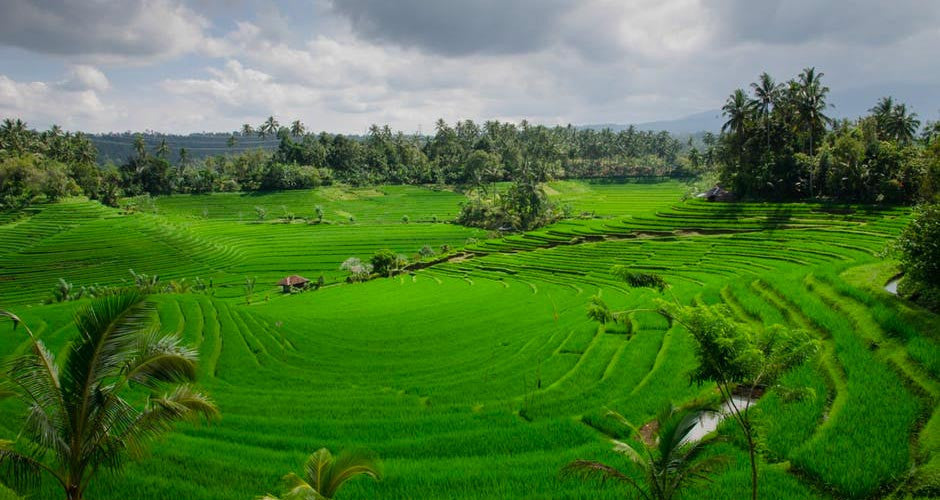 Is Ubud, Indonesia the new Digital Nomad Destination?