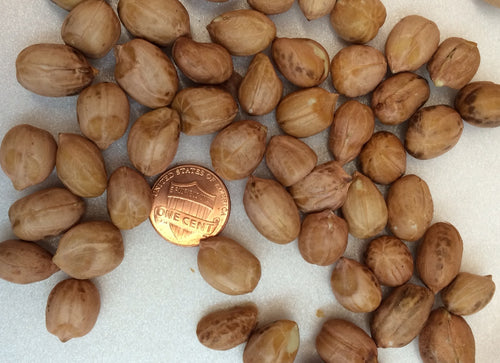 Bulk Raw Shelled Peanuts