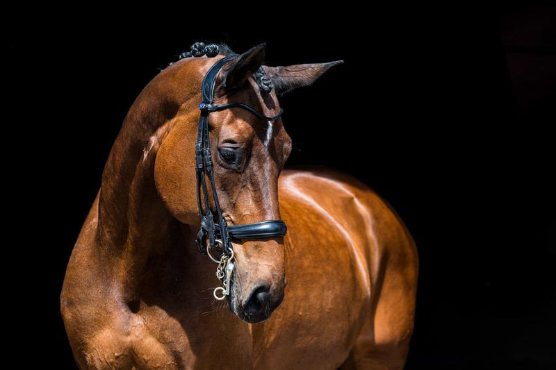 PS of Sweden Paragon Double Bridle