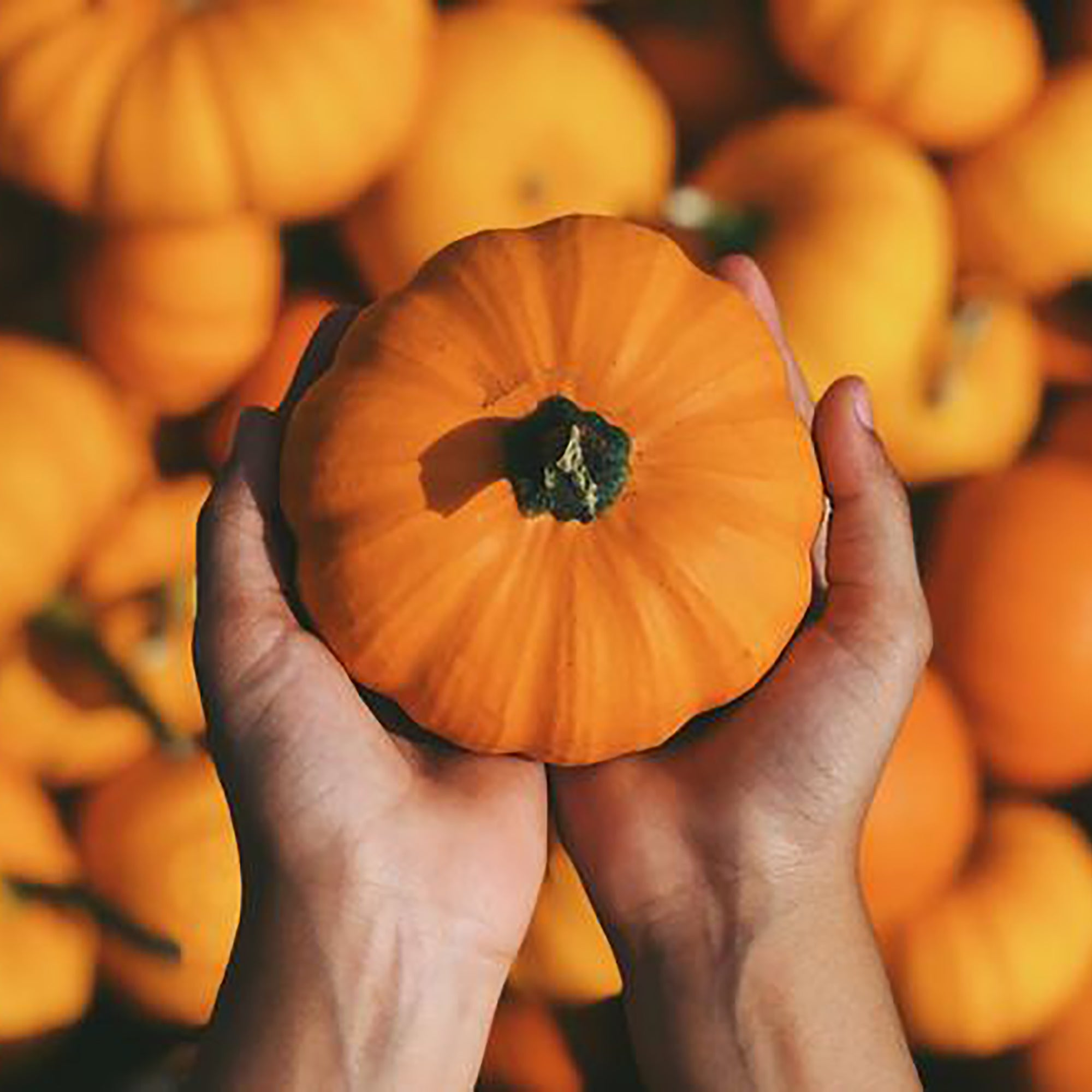 Pumpkin Power: 4 Ways To Treat Your Skin