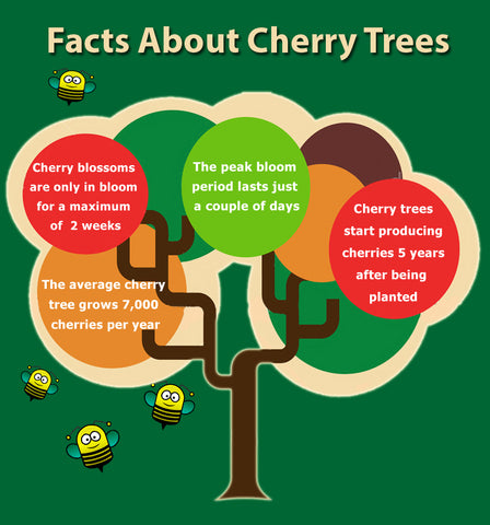 National Cherry Month - Cherry Tree Facts