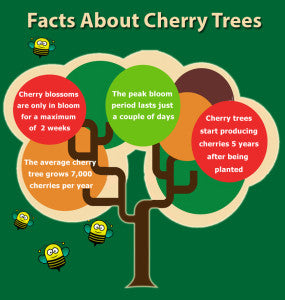 The Facts about Cherry Trees