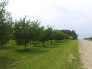 U Pick Cherry Orchard - Traverse Bay Farms