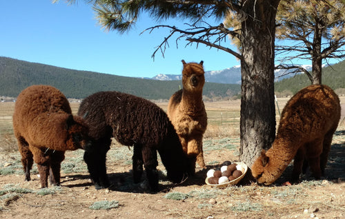 6 Alpaca Dryer Balls 100% Alpaca fiber and 100% Hypo-allergenic!
