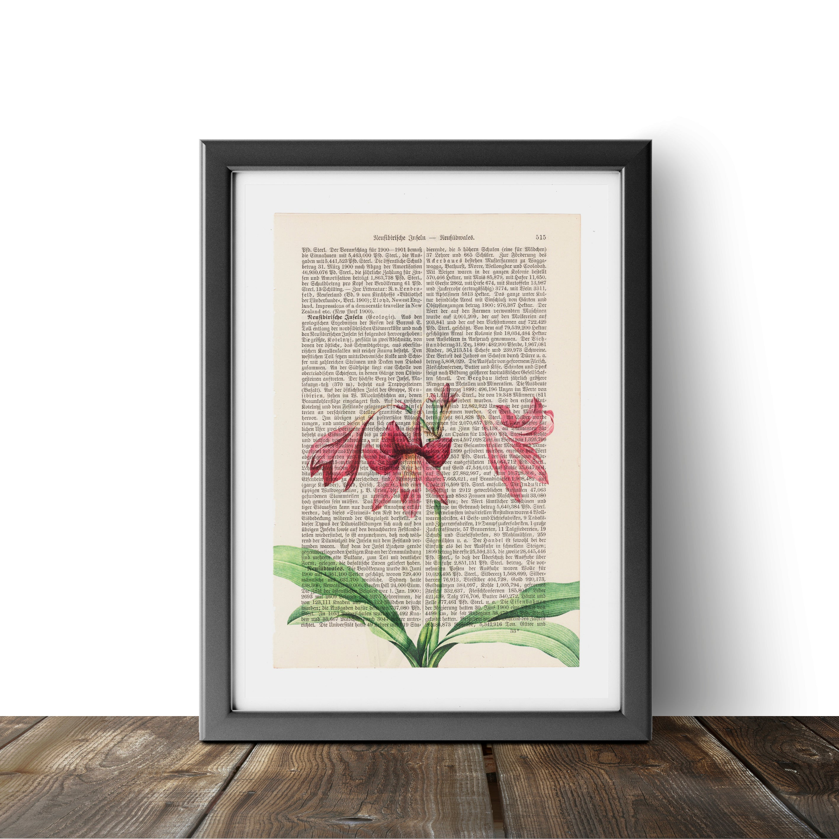Amaryllis - Flower - Art on Words