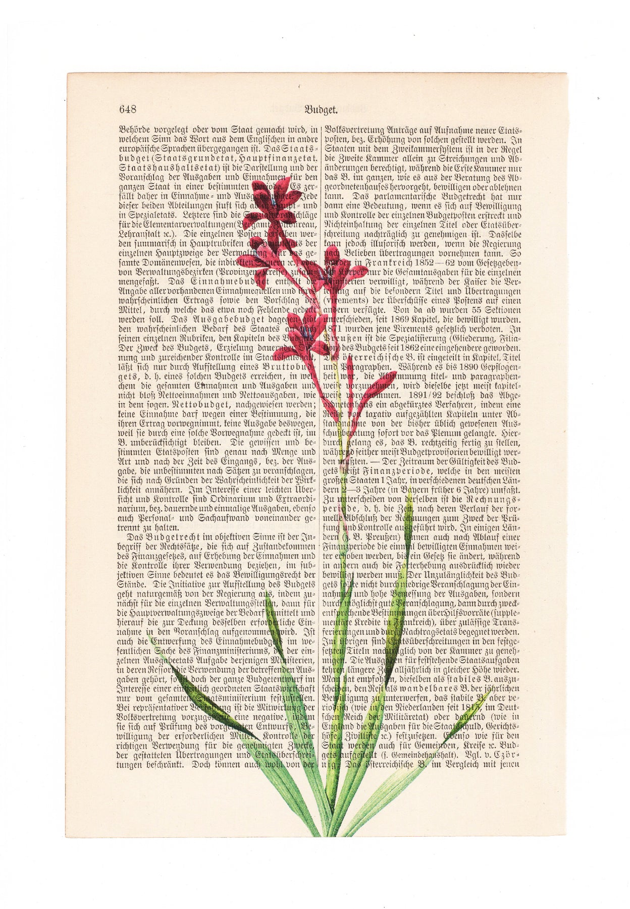 Gladiolus - Flower - Art on Words
