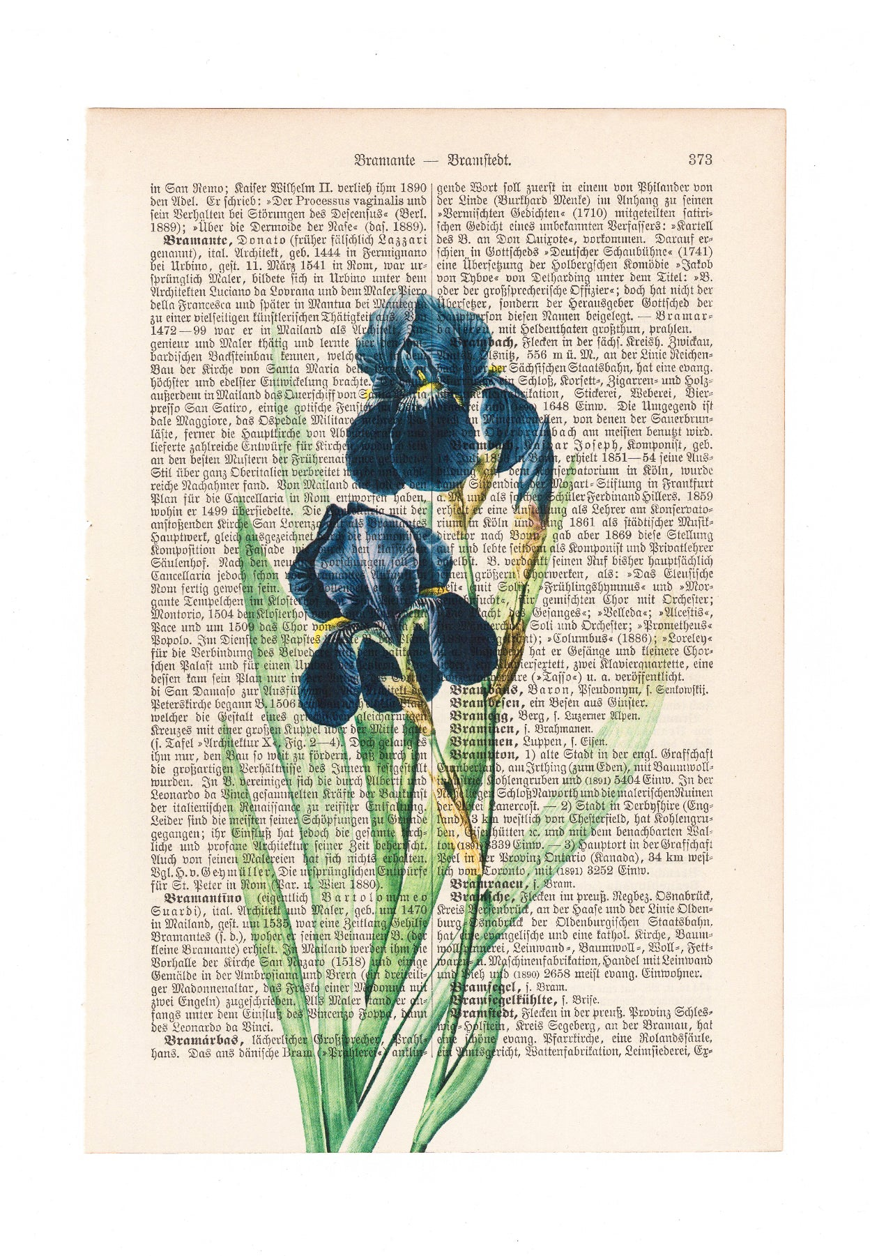 Iris - Flower - Art on Words