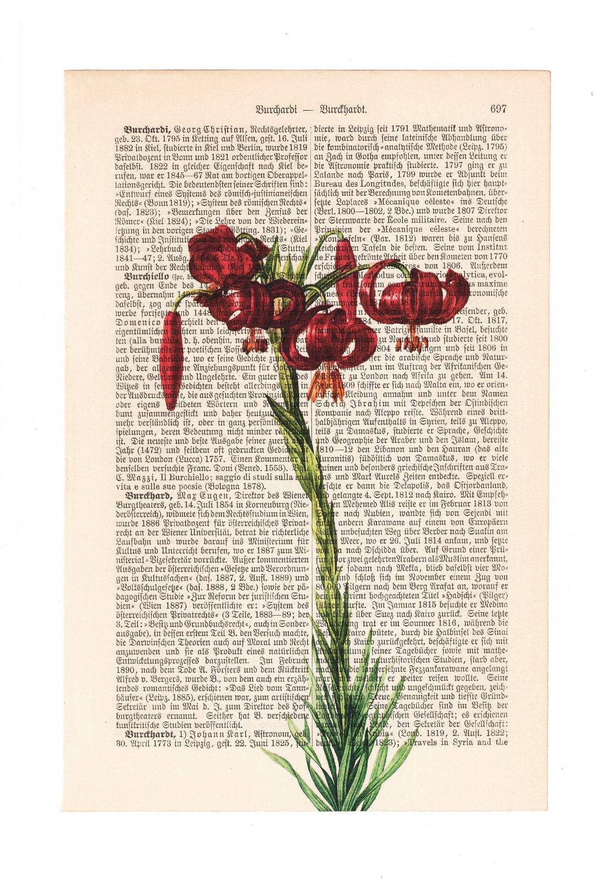 Lilium - Flower - Art on Words