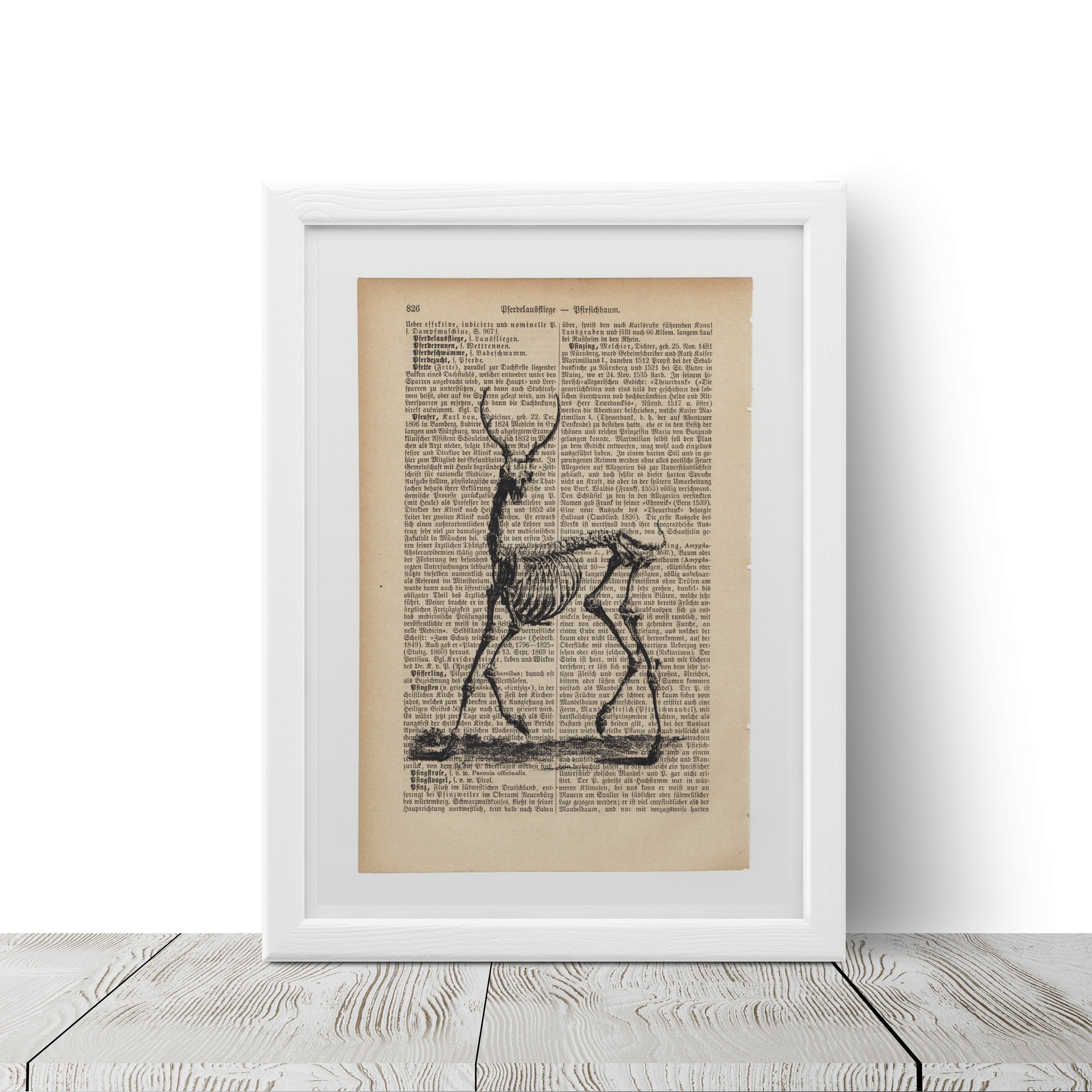 Deer's skeleton - Art on Words