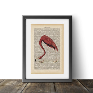 Flamingo - Art on Words