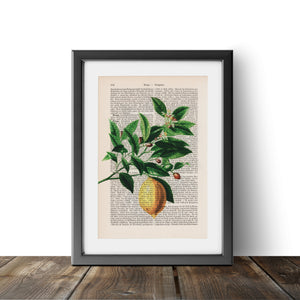 Lemon Tree - Art on Words