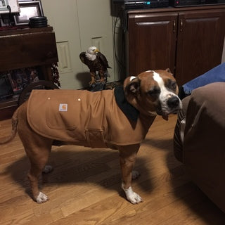 D102300 Carhartt Dog Chore Coat | Pioneer Outfitters
