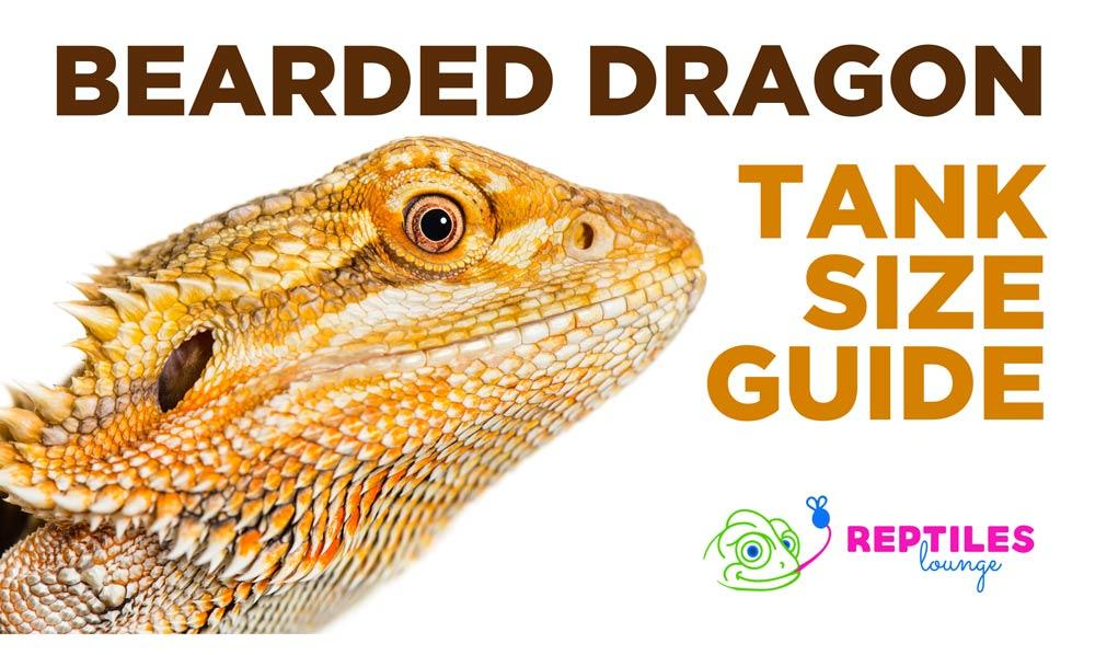 Bearded Dragon Tank Size Guide