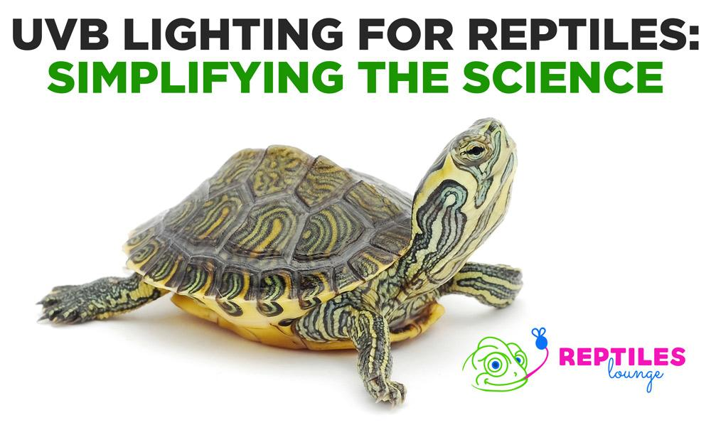 UVB Lighting for Reptiles: Simplifying the Science