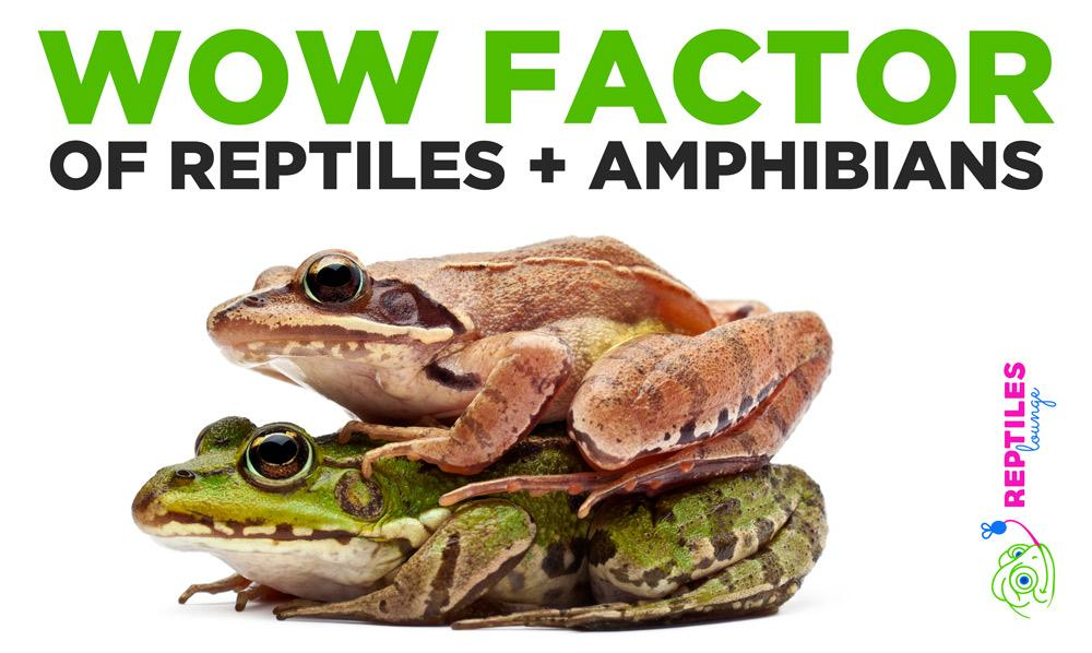 WOW Factor of Reptiles and Amphibians - Why are these creature so COOL?