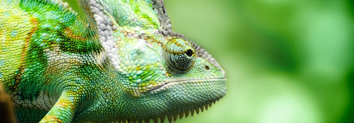 Reptiles Lounge Supplies Chameleon