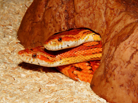 Selecting The Best Bedding For Your Reptile Reptiles Lounge