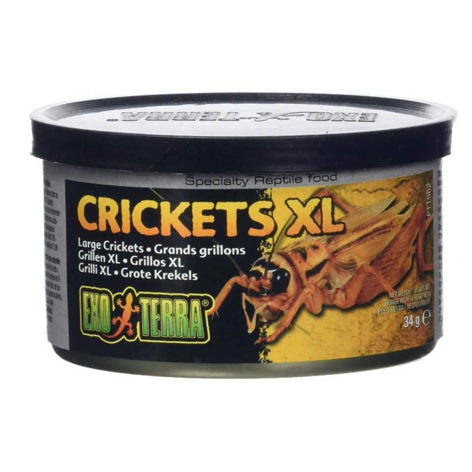 Exo Terra Canned Crickets XL Specialty Reptile Food 1.2 oz Foods Canned Exo Terra