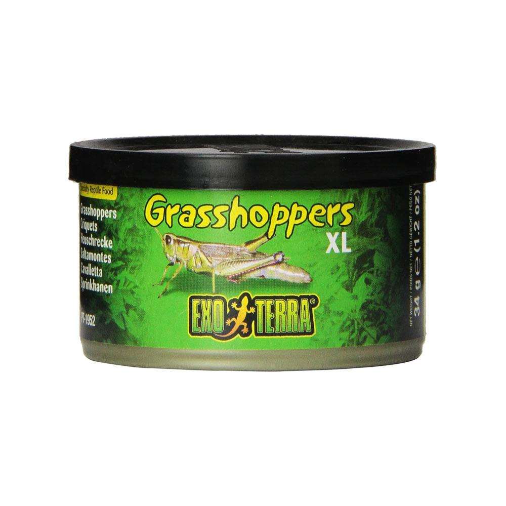 Exo Terra Grasshoppers Reptile Food - 2 Sizes Foods Canned Exo Terra