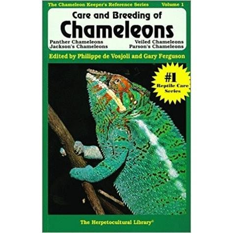 chameleon-care-breeding