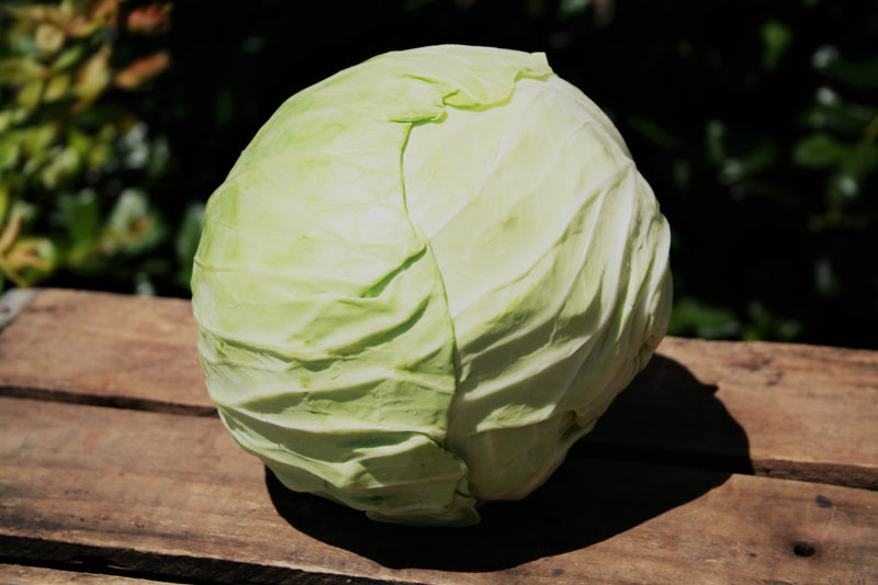 Organic Cabbage Head (<1 lb)