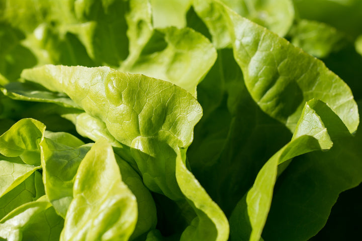 Naturally Grown Green Leaf Lettuce (head)