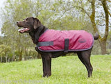 Weatherbeeta Windbreaker 420D Dog Rug Coat Plum/Grey Showerproof