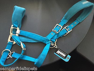 Roma Brights Headcollar - Aqua - Full