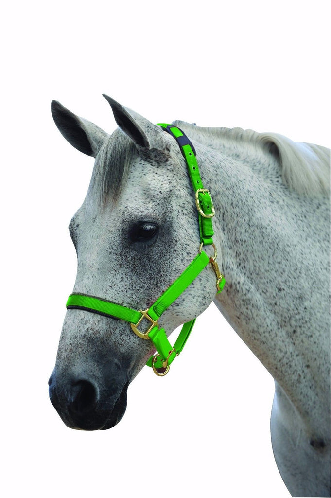 Roma Brights Horse Headcollar Halter Lime or Orange Warmblood size