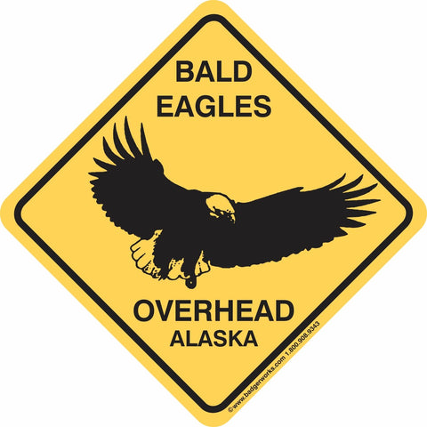 Bald Eagles Overhead Alaska