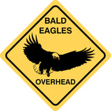 Bald Eagles Overhead