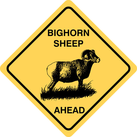 Bighorn Sheep Ahead
