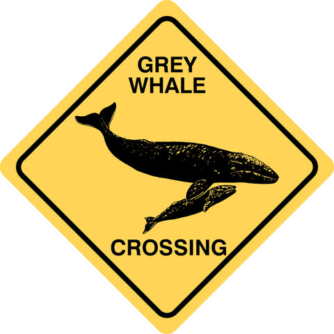Grey Whale Crossing
