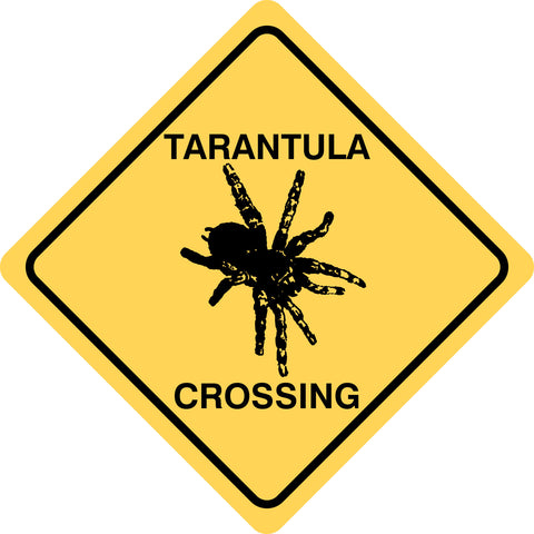 Tarantula Crossing