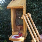 Buterfly Shelter Feeder 7 150x150 Wild Pollinators Crucial   Increase Pollination in your Garden!