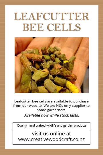 Leafcutter Bee Cells Flyer x50