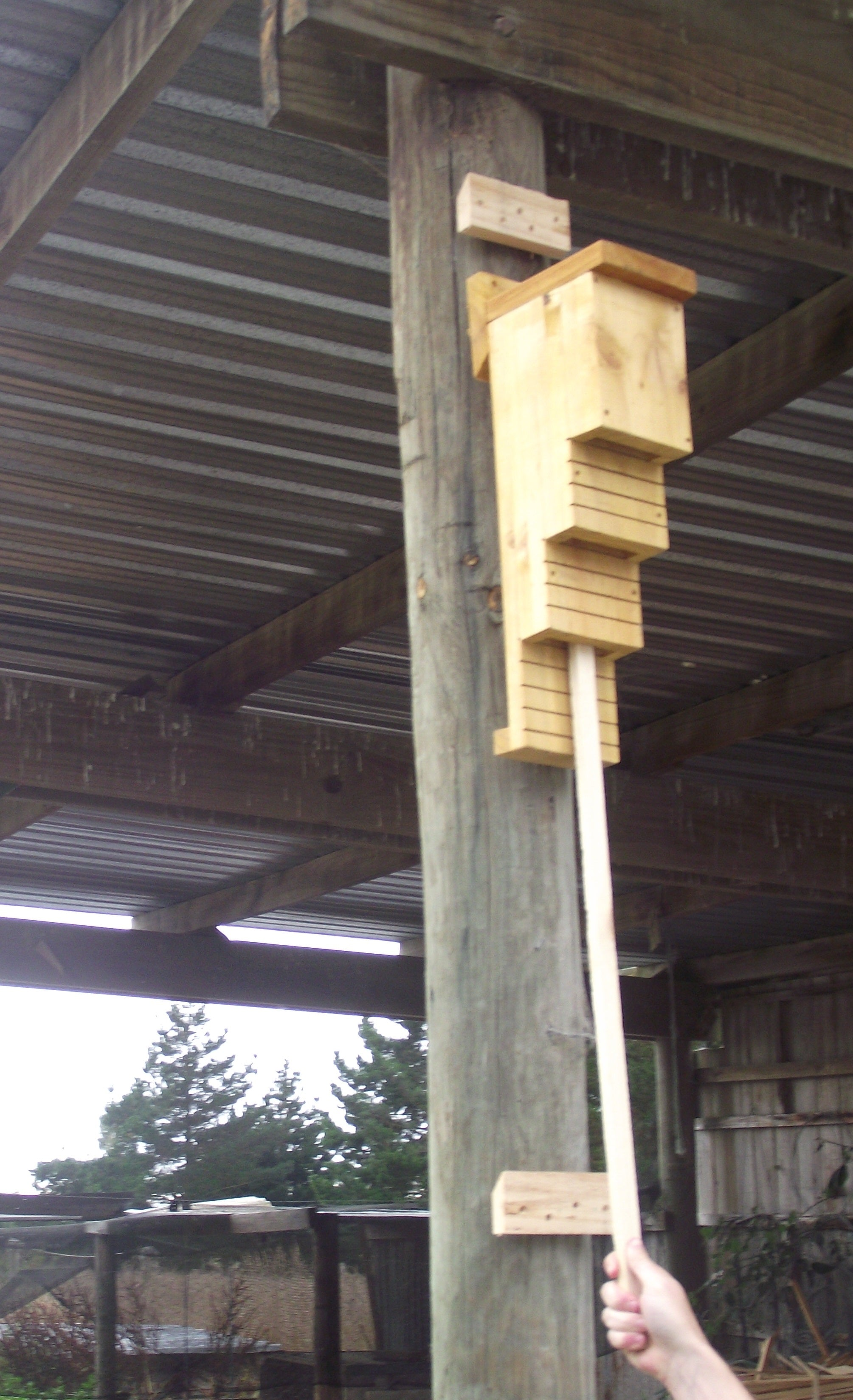 Removal and Inspection Bat Roosting Box 2