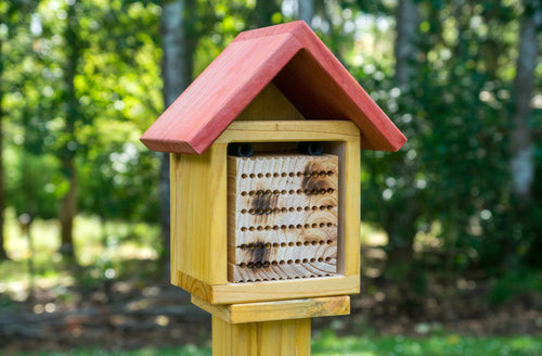 Ultimate Pollination Package - Creative Woodcraft New Zealand