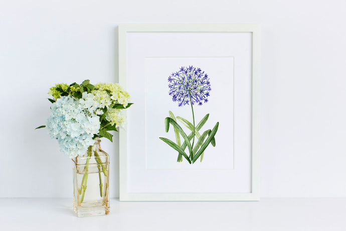 Agapanthus - 50 Watercolor Flowers Project