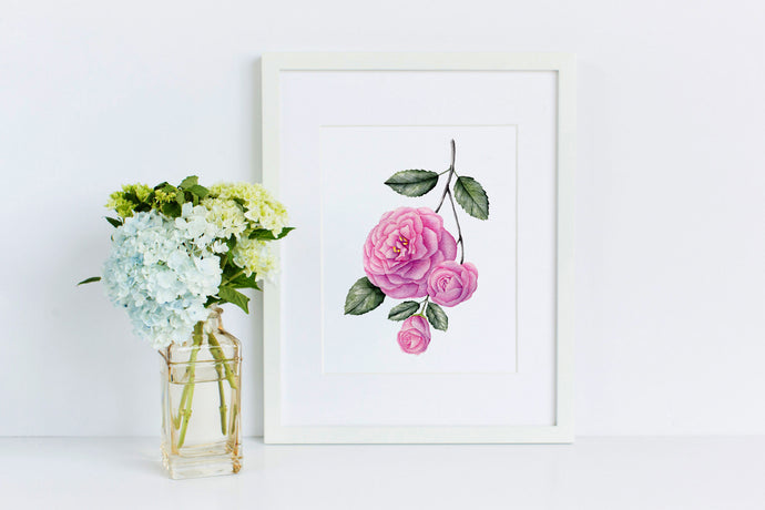 Camellia - 50 Watercolor Flowers Project