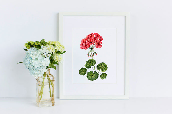 Geranium - 50 Watercolor Flowers Project